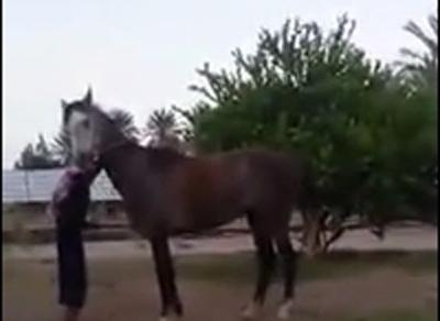 """صاحب """"الحصان المعذب"""" ينشر فيديو جديدًا : كنت أروّضه"""