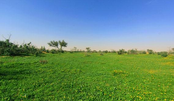 """الباحث الفلكي """"عبدالعزيزالشمري"""" : فصل الربيع يدخل يوم الجمعة"""