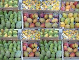 خبراء 8 دول عربية يناقشون زراعة المانجو في جازان