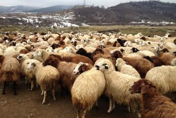 """""""الزراعة"""" تمنع رسمياً استيراد المواشي الحية من إيران"""