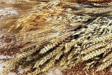 5 فوائد غير معروفة لأكل الحبوب الكاملة