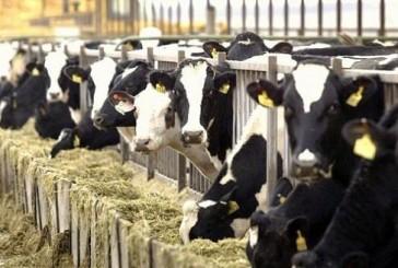"""""""حظر مؤقت"""" على استيراد الأبقار والماعز والضأن الحية من الكويت"""