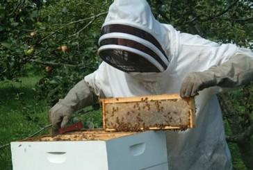 حظر استيراد طوائف النحل من البرازيل