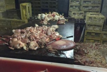كشف عمالة تسوق الدجاج الفاسد وتزور تاريخ الصلاحية في جدة