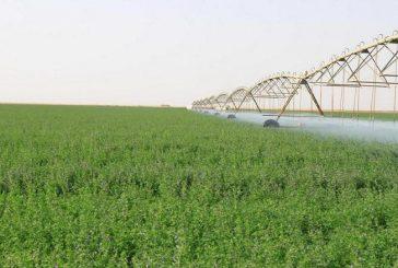 السعودية تخطط لإنشاء «5» شركات حكومية للاستثمار الزراعي في إفريقيا