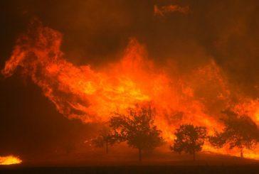 القنصل العام: لا إصابات للسعوديين جراء الحرائق المشتعلة بكاليفورنيا