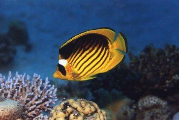 ورشة عمل وطنية للاستفادة اقتصاديا من سمك الزينة  بالمملكة