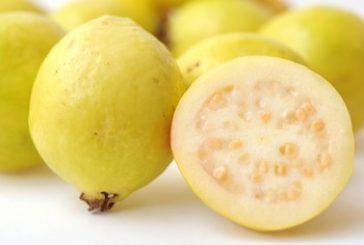 7 فـوائد مذهلة للجـوافة .. فاكهة الصيف المنسية