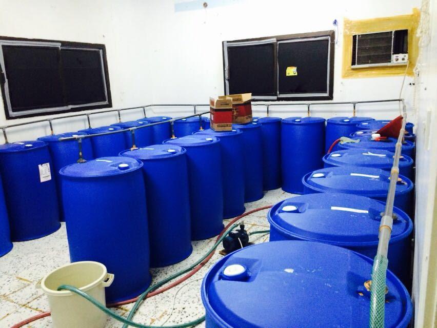 بالصور..ضبط مصنع للخمر فيه 63 برميل و1300 قارورة بالرياض