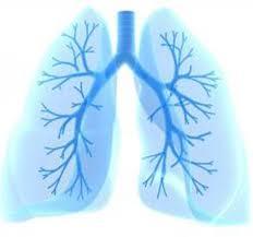 ما هو الفرق بين الالتهاب الرئوي و التهاب القصبات الهوائية ؟