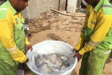 بلدية بحرة تتلف أسماكاً فاسدة بحوش شعبي