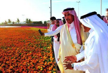 اطلق مهرجان الزهور والحدائق بينبع الصناعية