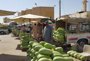 وادي الدواسر تضخ 64 ألف طن من الحبحب للسوق المحلي