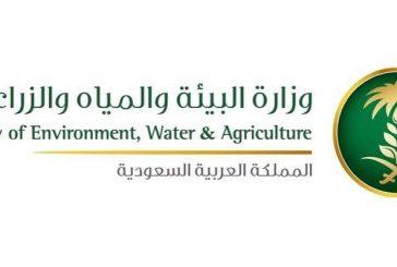 """وزارة """"البيئة"""" تتجه إلى دعم الزراعة العمودية المغلقة"""