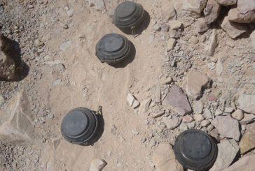 الجيش اليمني يلقي القبض على فريق تابع لميليشيا الحوثي يقوم بزراعة الألغام