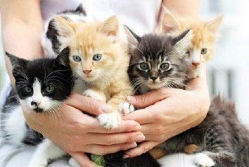 تحذير طبي.. احتضان القطط الصغيرة قد يميتك