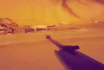 السجن عام و20 ألف غرامة بحق سفاح القطط