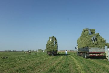 البيئة تعلن آلية تطيبق ضوابط إيقاف زراعة الأعلاف الخضراء