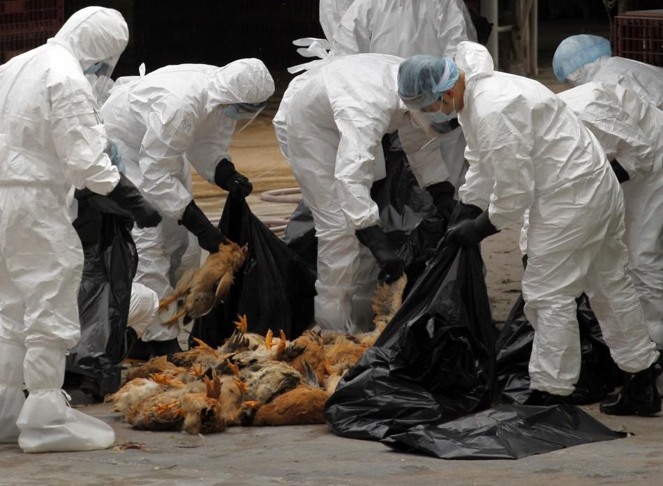 تسجيل 5 إصابات بانفلونز الطيور في الرياض والأحساء والدوادمي خلال الـ24 ساعة
